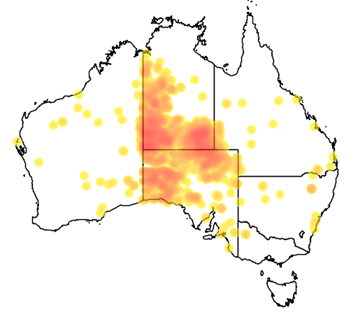 distribution map showing range of Camelus dromedarius in Australia