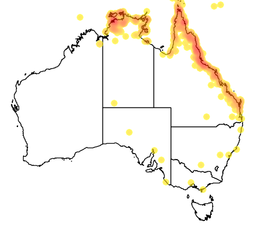 distribution map showing range of Caprimulgus macrurus in Australia
