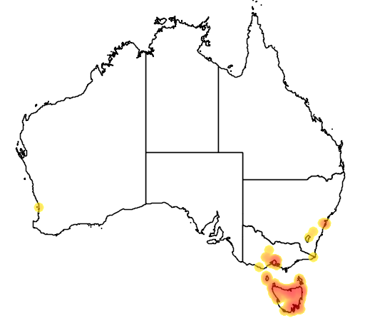 distribution map showing range of Carduelis chloris in Australia