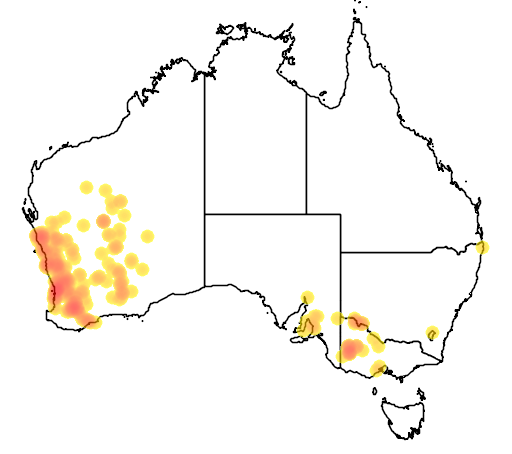 distribution map showing range of Casuarina obesa in Australia