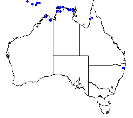 distribution map showing range of Cerberus rhynchops in Australia