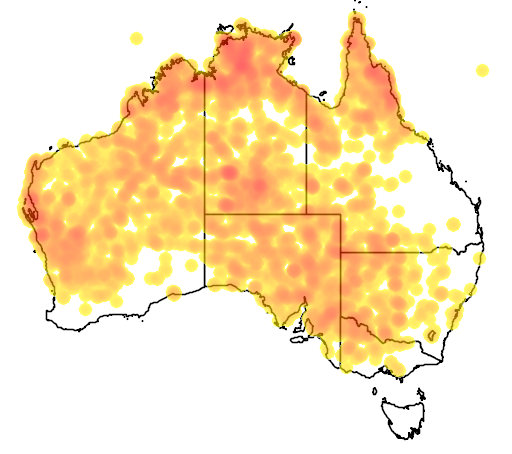 distribution map showing range of Certhionyx niger in Australia
