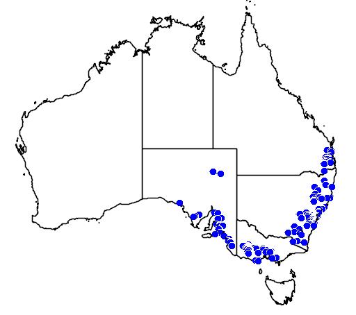 distribution map showing range of Cervus elaphus in Australia