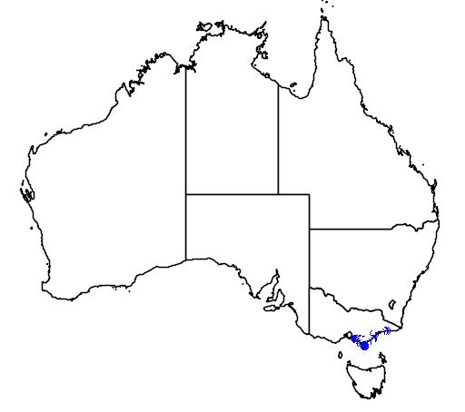 distribution map showing range of Cervus porcinus in Australia