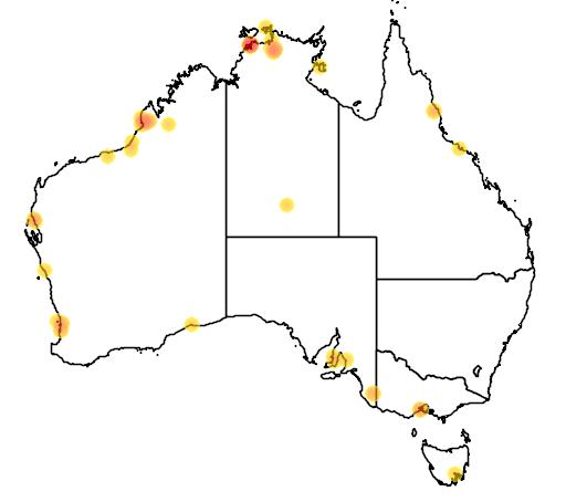 distribution map showing range of Charadrius dubius in Australia