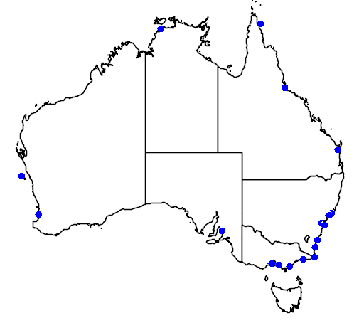 distribution map showing range of Charadrius hiaticula in Australia