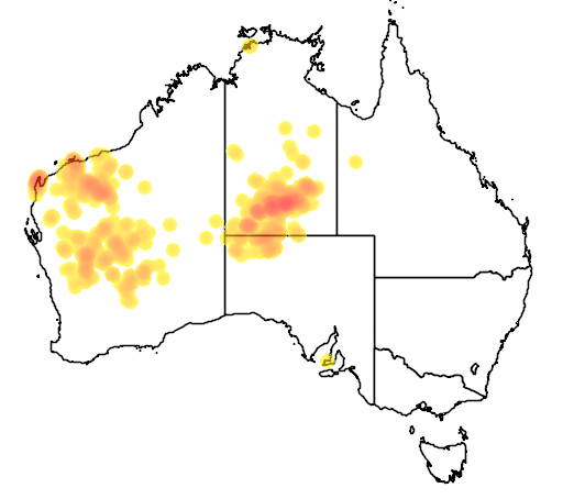 distribution map showing range of Chlamydera guttata in Australia