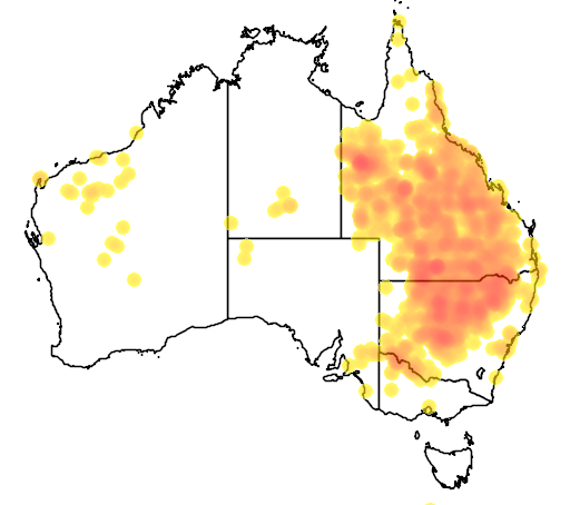 distribution map showing range of Chlamydera maculata in Australia