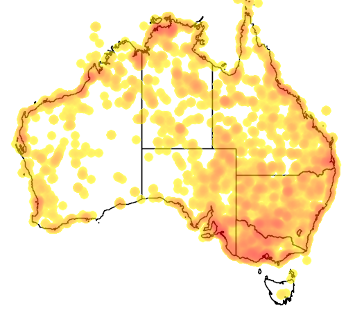 distribution map showing range of Chlidonias hybridus in Australia