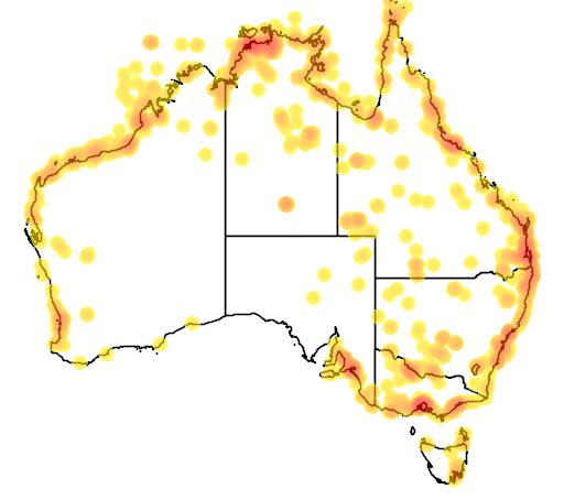 distribution map showing range of Chlidonias leucopterus in Australia