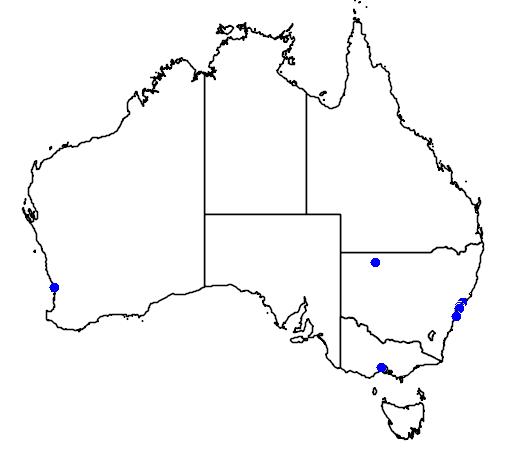 distribution map showing range of Chlidonias niger in Australia