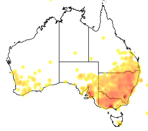 distribution map showing range of Chloris truncata in Australia