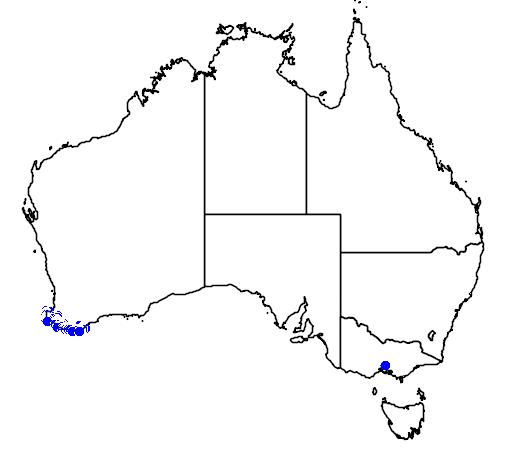 distribution map showing range of Chorilaena quercifolia in Australia