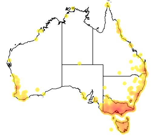 distribution map showing range of Chrysococcyx lucidus in Australia