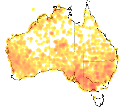 distribution map showing range of Chrysococcyx osculans in Australia