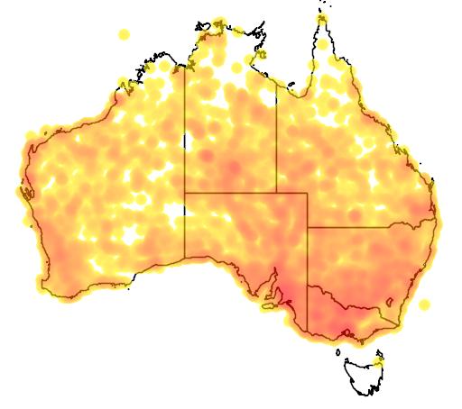 distribution map showing range of Cincloramphus cruralis in Australia