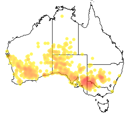 distribution map showing range of Cinclosoma castanotus in Australia