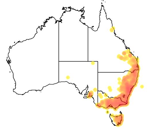 distribution map showing range of Cinclosoma punctatum in Australia