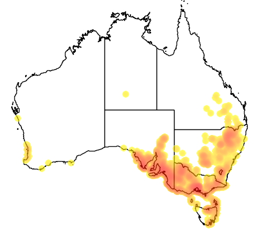 distribution map showing range of Clematis microphylla in Australia