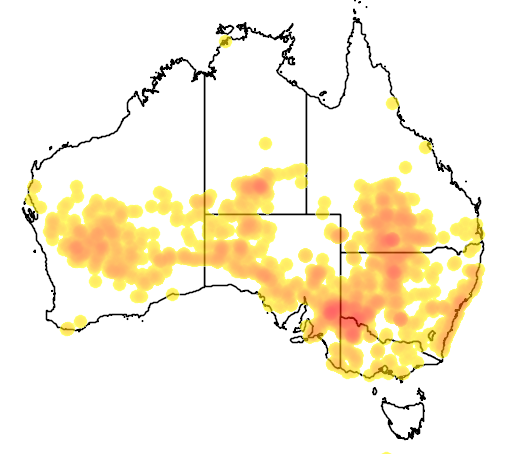 distribution map showing range of Climacteris affinis in Australia