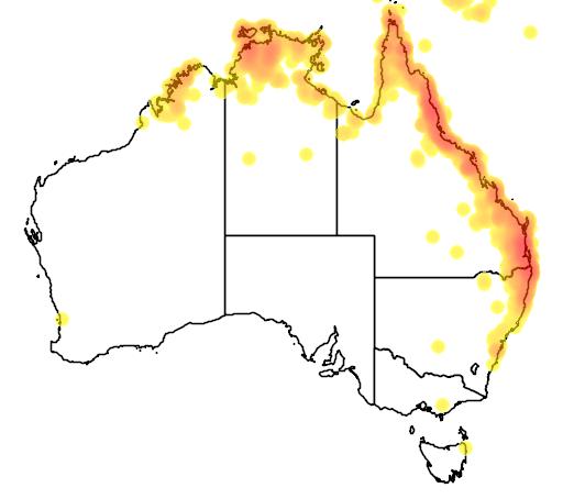 distribution map showing range of Colluricincla megarhyncha in Australia