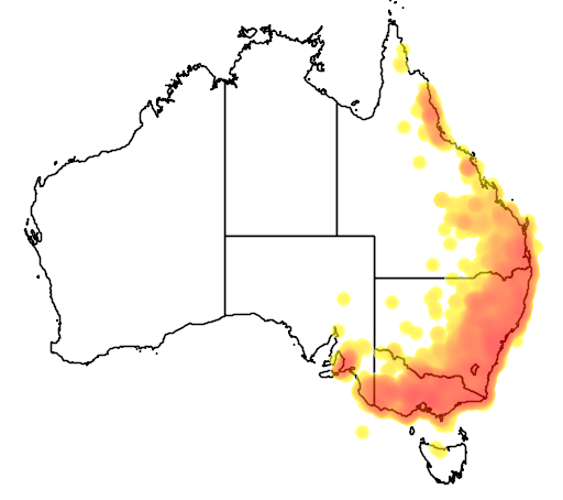 distribution map showing range of Cormobates leucophaeus in Australia