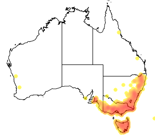 distribution map showing range of Coronidium scorpioides in Australia