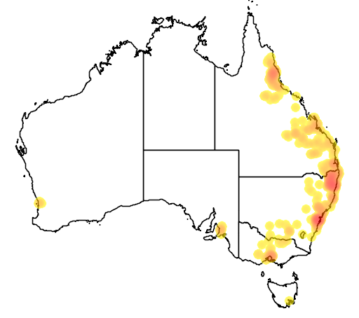 distribution map showing range of Corymbia citriodora in Australia