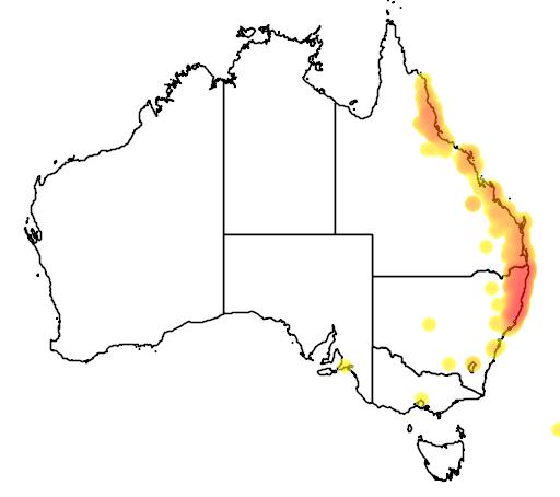 distribution map showing range of Corymbia intermedia in Australia