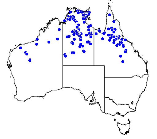 distribution map showing range of Corymbia setosa in Australia