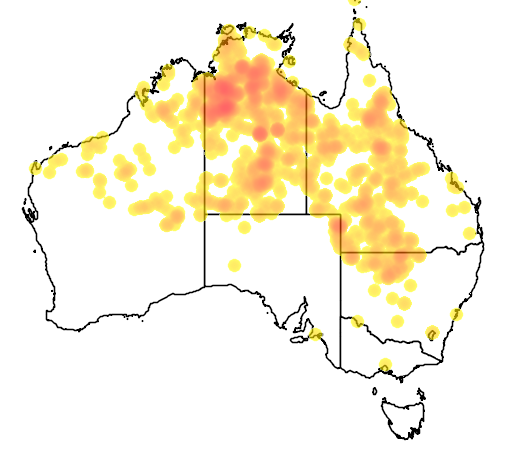 distribution map showing range of Corymbia terminalis in Australia