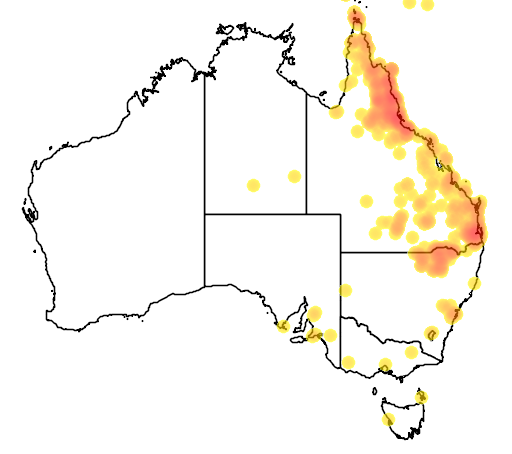 distribution map showing range of Corymbia tessellaris in Australia