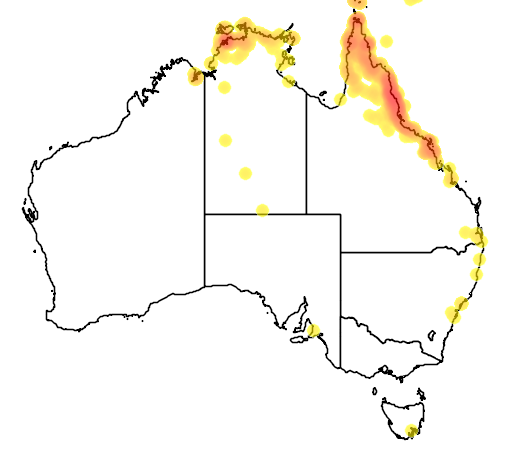 distribution map showing range of Cracticus quoyi in Australia