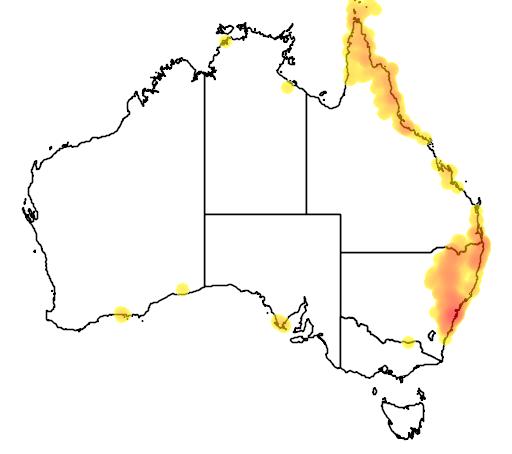 distribution map showing range of Cryptoblepharus virgatus in Australia
