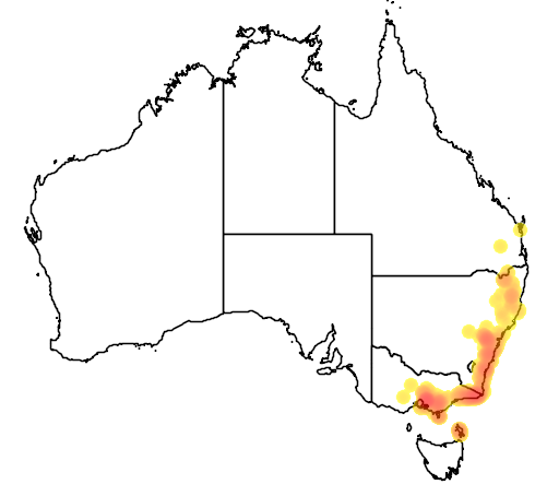 distribution map showing range of Cryptostylis leptochila in Australia