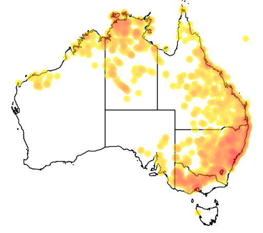 distribution map showing range of Ctenotus robustus in Australia