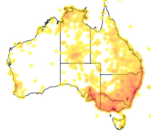 distribution map showing range of Cynodon dactylon in Australia