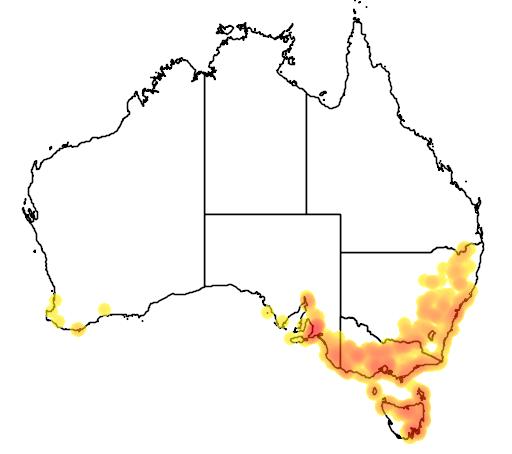 distribution map showing range of Cyrtostylis reniformis in Australia