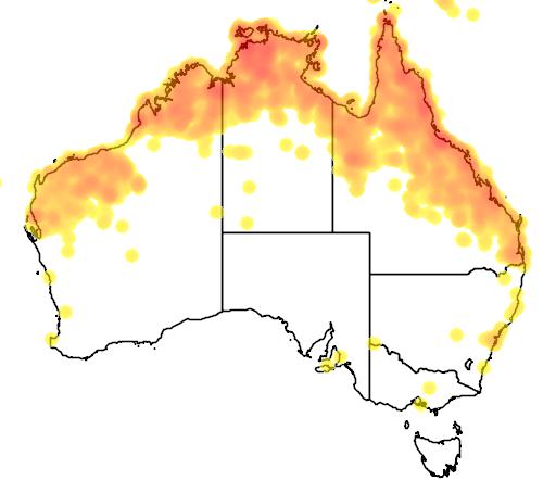 distribution map showing range of Dacelo leachii in Australia