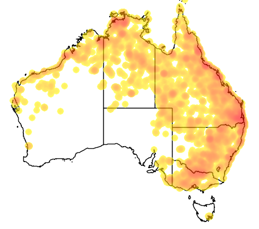 distribution map showing range of Dendrocygna eytoni in Australia