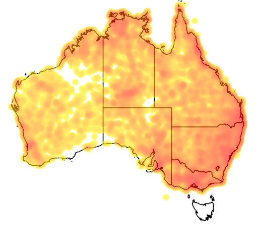distribution map showing range of Dicaeum hirundinaceum in Australia