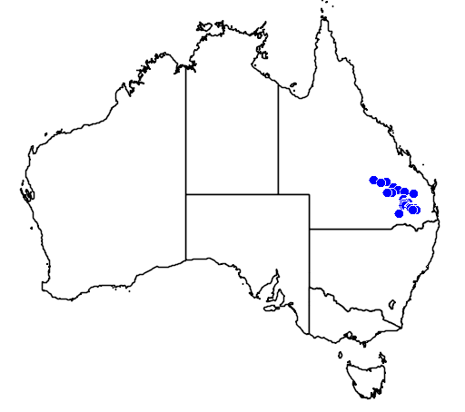 distribution map showing range of Diplodactylus taenicauda in Australia