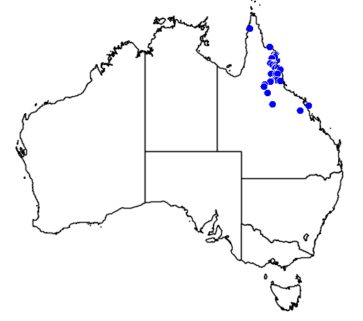 distribution map showing range of Dipodium elegantulum in Australia