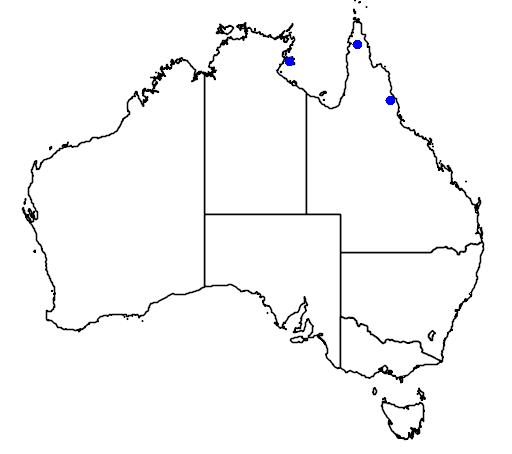 distribution map showing range of Dipodium stenochilum in Australia