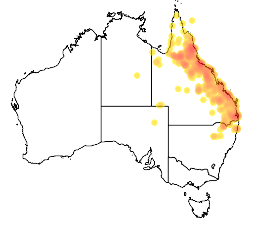 distribution map showing range of Diporiphora australis in Australia