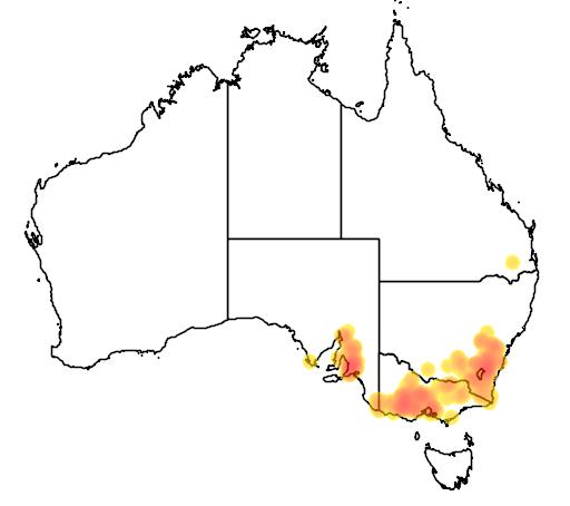 distribution map showing range of Diuris behrii in Australia