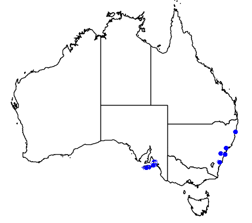 distribution map showing range of Diuris brevifolia in Australia
