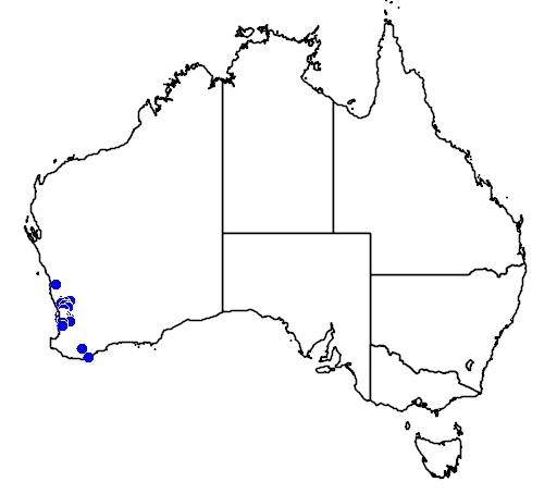 distribution map showing range of Diuris brumalis in Australia