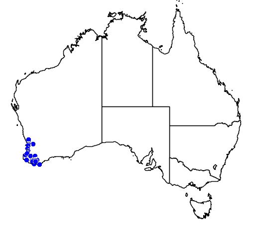 distribution map showing range of Diuris drummondii in Australia