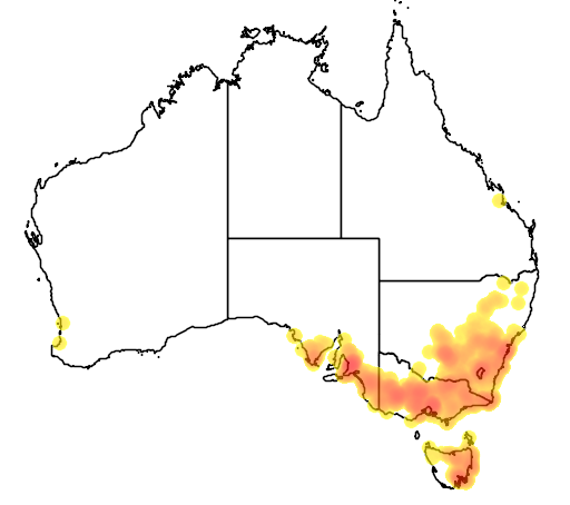 distribution map showing range of Diuris pardina in Australia